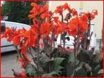 Schwertlilien_0145