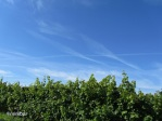 tiefblauer Himmel_0162