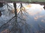 im Wasser derGräfte_2919
