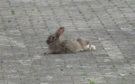 Hase Weinf 2011IMG_3228