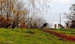 Rehe Nov2011IMG_4812