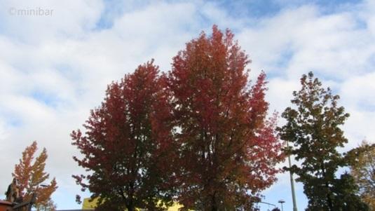 Herbstbäume kt 2011IMG_4465