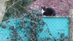Katze IMG_5776