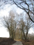 Allee IMG_6360