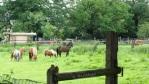 ruihige Pferde IMG_9203