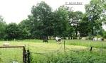 eilige Pferde IMG_9206