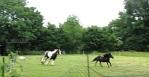 rasende Pferde, arme SauIMG_9207