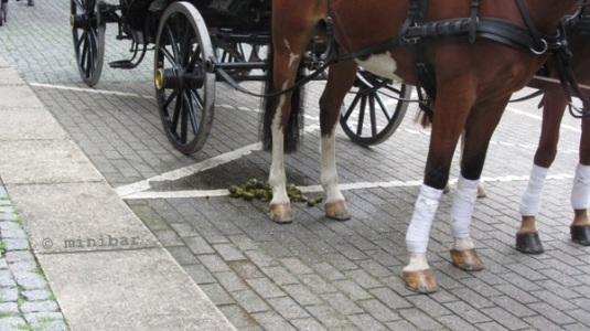 Pferde-Äpfel Asch-NordkIMG_1019