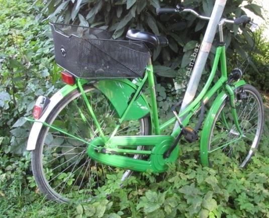 grünesRad IMG_1314