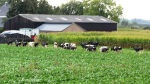 beim Bauernhof KalkarIMG_3579