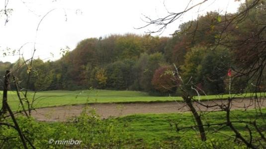 Herbstwald IMG_4276Wester