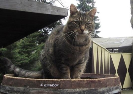 Katze BlaIMG_6366