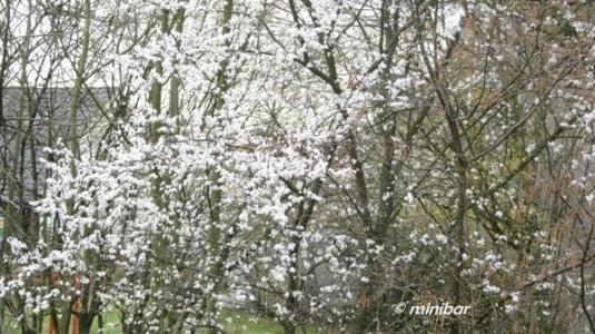 weißerBaum 6613