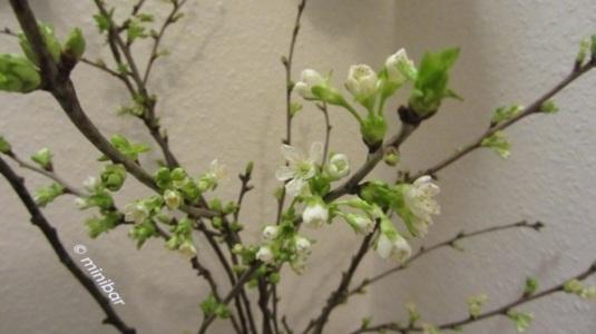Blüten 6802