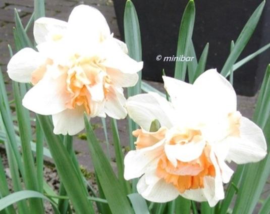 IMG_7134RE Frühling