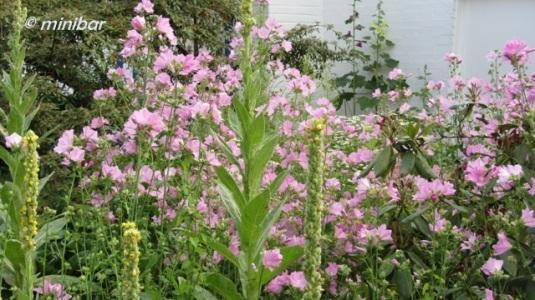 8649 Blüten Coesfeld