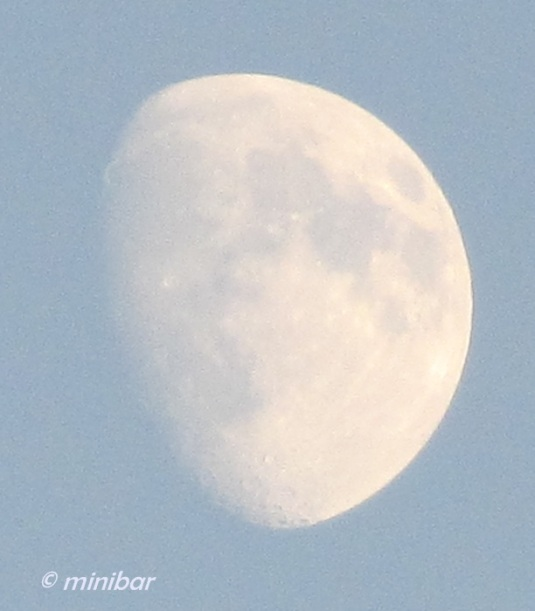 IMG_8760Wester13 3/4Mond