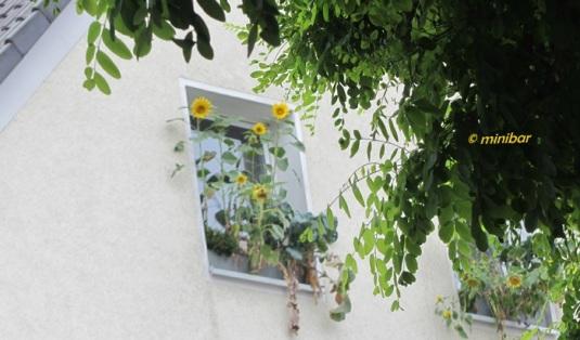 IMG_9790Wester13 Fenster
