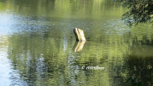 LimbIMG_9835
