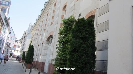 LimbIMG_9881