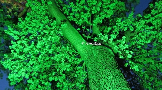 IMG_0587RE leucht