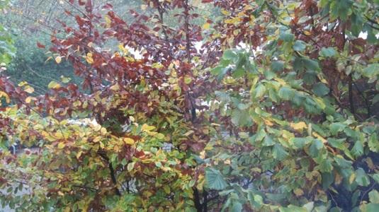 IMG_0645Sen13 Blätterwerdendunkel