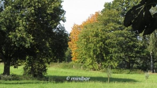 3628 Westerholt Baut