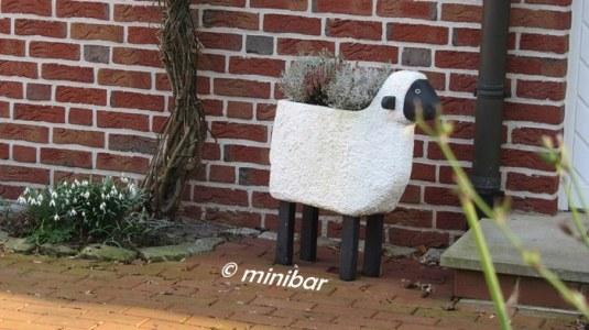 IMG_2450Sen14 anderes Schaf