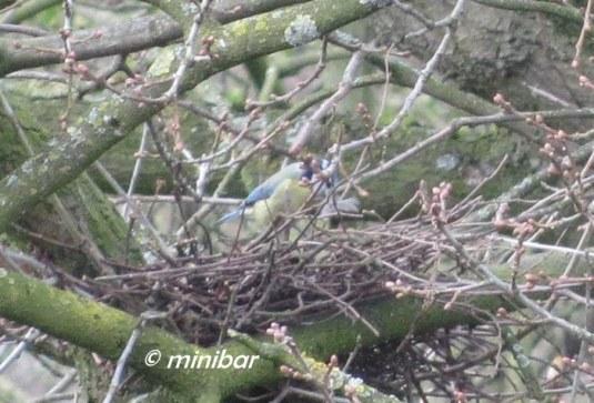 IMG_2928Sen14 Nest