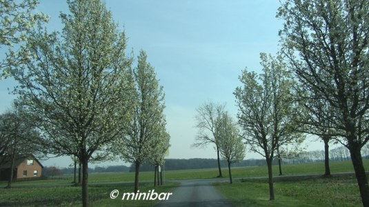 IMG_3023T Allee