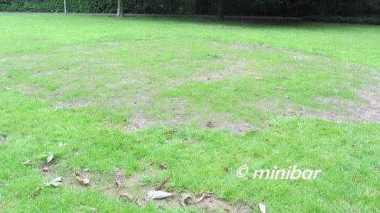IMG_3814Sen14 Rasen nach Osterfeuer