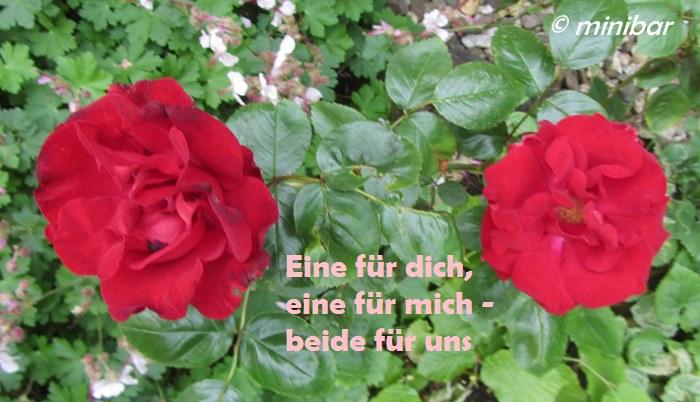 haus rote rose sex treffen gelsenkirchen