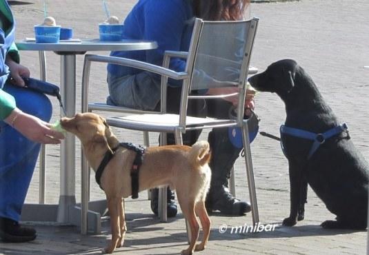 IMG_2694Sen14 Hunde-Eis