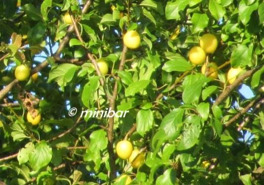 IMG_5031Sen 07.14-crop
