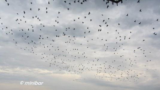 IMG_5055MS dieVögel