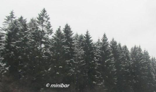 IMG_8454Rückf.Nierst
