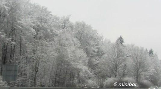 IMG_8457Rückf.Nierst