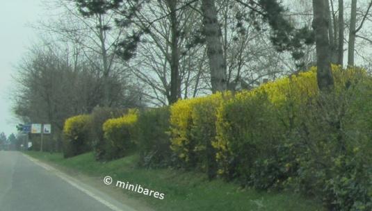 IMG_9267Nierstein 5+6April 15